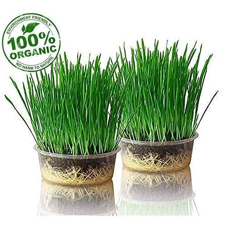 purr paw 2er Pflanzset für Katzengras, Set aus Bio-Samen, Schale und Kompost, fertige Bio-Saatmischung