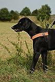 TRE Ponti Brustgeschirrfür Hunde, große Größe, mit Rückengriff, reflektierender Rand,Größe XL, Orange