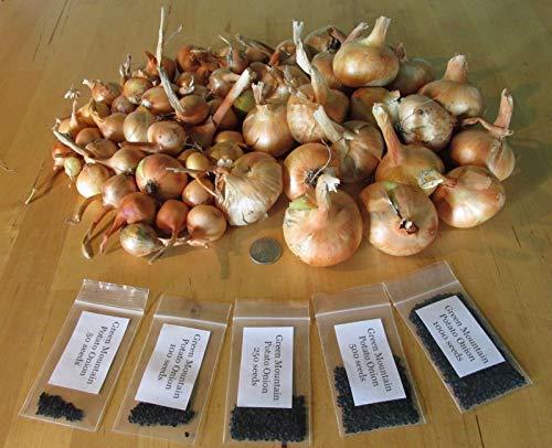 Generic SAMEN: 3 klein: Grüner Kartoffel-Zwiebel-Samen und ~ Bio-Multiplier Zwiebeln Internationalen Kartoffel