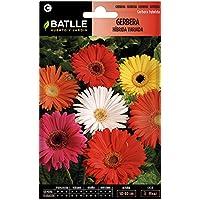 Semillas de Flores - Gerbera Híbrida variada - Batlle
