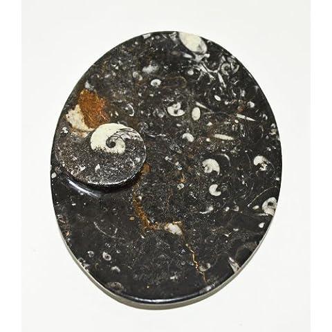 Oval tallada negro plato de jabón/Soporte/organizador de escritorio con ammonoids y Orthoceras período de fósiles de todo de era paleozoica 400millones a 15cm