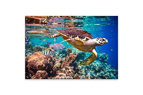 wand-Bild - 40 x 60 cm - Schildkröte im Indischen Ozean (Schildkröten-bilder)