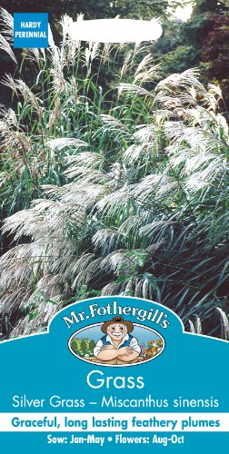 Mr Fothergill 's 14522Gras Silber Gras-Chinaschilf Early Hybriden Samen