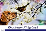 Rhodesian Ridgeback - Moments (Wandkalender 2019 DIN A3 quer): Zauberhafte Momente (Monatskalender, 14 Seiten ) (CALVENDO Tiere)