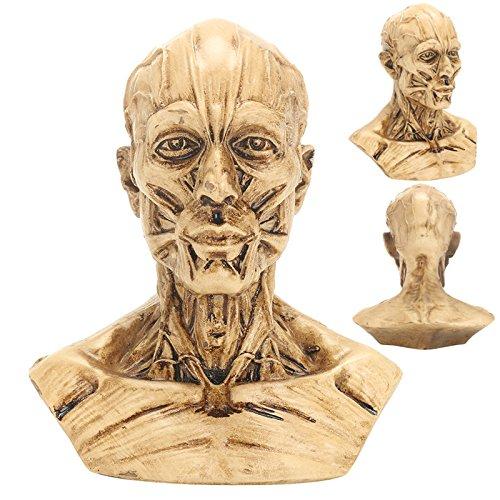 JieMiTe Retro Schädel Modell 4 10 cm Menschlichen Anatomischen Anatomie Schädel Kopf Muscle Bone Medical Modell Wohnkultur