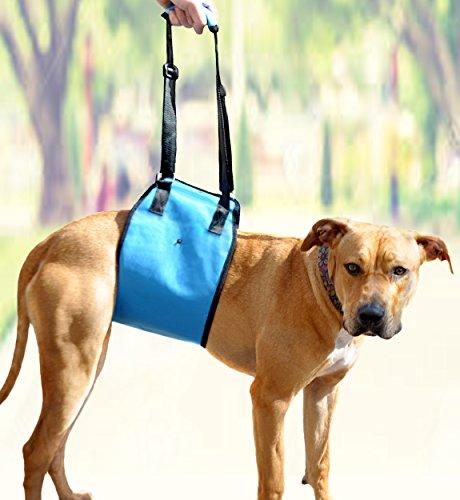 AMZpets Hundegeschirr mit Stützschlinge hilft Hunden mit schwachen Vorder- oder Hinterbeinen beim Aufstehen, Walken, Einsteigen in Autos, Treppen Alternative zum Rollstuhl für Hunde, X-Small, blau (Hinzufügen Von Maschine Rollt)