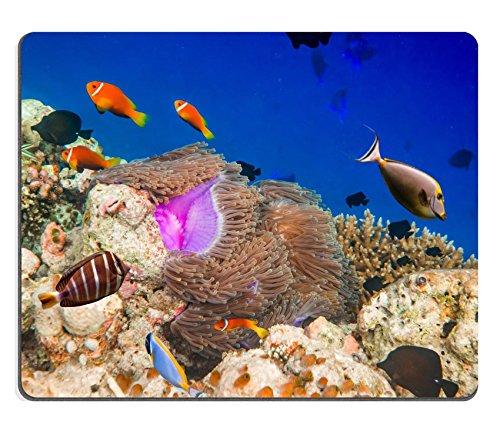 Liili mouse pad Natural rubber Mousepad Image ID: 28566502Reef con una varietà di custodia rigida e morbida coralli e pesci tropicali Maldive oceano indiano