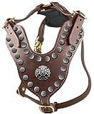 Dean & Tyler The Crusader Schöne Messing Hardware Leder Harness mit Schwarz Filz Polsterung, braun, Medium–passt Umfang Größe: 61cm bis 79cm