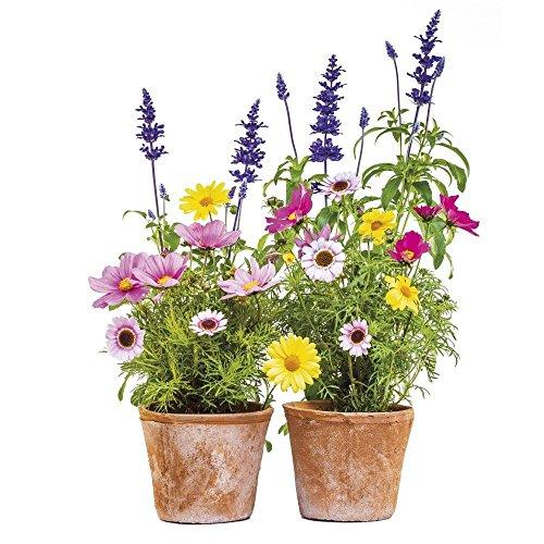 fenstertattoo blumen Komar - Window-Sticker SPRINGTIME - 31 x 31 cm - Fensterdeko, Fenstersticker, Fensterfolie, Blumen, Blumentöpfe, Natur - 16000