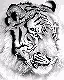 TianMai Neu Malen nach Zahlen - Weißer Tiger 16 * 20 Zoll Leinen Segeltuch - Digitales Ölgemälde Segeltuch Wand Kunst Grafik für Weihnachten Decor Decorations Geschenke - DIY Farbe durch Zahl DIY Segeltuch-Kit für Erweiterte Erwachsene Kinder Senioren Junior (Mit Rahmen)