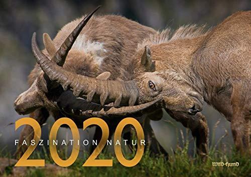 Faszination Natur Kalender 2020: WILD UND HUND (Hund Kalender)