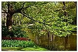 Wallario Herdabdeckplatte/Spritzschutz aus Glas, 1-teilig, 80x52cm, für Ceran- und Induktionsherde, Motiv Bunte Blumen im Park am Wasser - Frühblüher am Ufer
