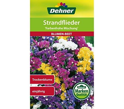"""Dehner Blumen-Saatgut, Strandflieder """"Farbenfrohe Mischung"""", 5er Pack (5 x 0.7 g)"""