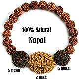 SHIV SHANKAR ACCESSORIES Rudraksha Rudraksh 2 5 Mukhi (Face) Beads Mala Wrist band bracelet-AA+++