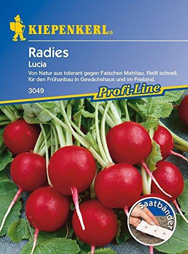 Kiepenkerl 3049 Radies Lucia (Saatband) (Radieschensamen)