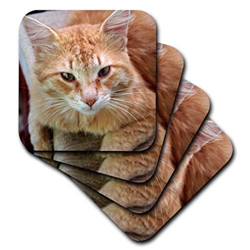 3dRose Taiche Fotografie-Katzen-A Ginger Tom Street cat-Ginger, weiß Old Stecker gestromt Katze Entspannen auf Stuhl-Untersetzer, set-of-8-Soft - Ginger Tom