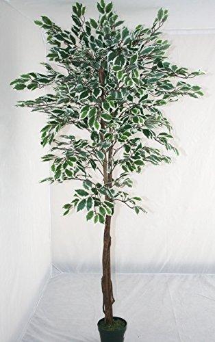 Homescapes árbol Ficus artificial, hojas verdes y blancas, 180 cm, en maceta