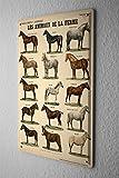 Blechschild Pferde Deko Pferderassen Metall Deko Wand Schild 20X30 cm