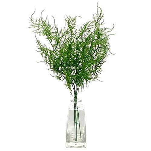 1 Bund Asparagus Plumosus, 5 einzelne Stiele / TOP PREIS !!!