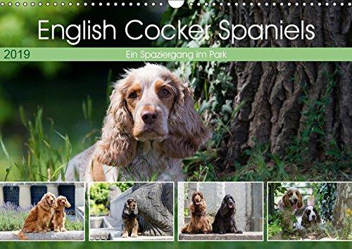 English Cocker Spaniels - Ein Spaziergang im Park (Wandkalender 2019 DIN A3 quer): English Cocker Spaniel im Park auf der Mathildenhöhe (Monatskalender, 14 Seiten ) (CALVENDO Tiere) -