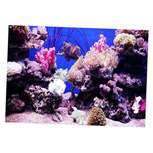 SM SunniMix Aquarium Poster Hintergrund Rückwandposter für Aquarien - Korallen S