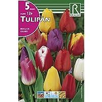 Bulbo de tulipan variado (bolsa 5 bulbos)