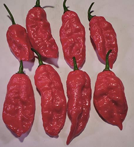 PLAT FIRM GERMINATIONSAMEN: Seltener Superhot Pfeffer Seeds - einschließlich Trinidad Scorpion CARDI & 7 Pot Douglah