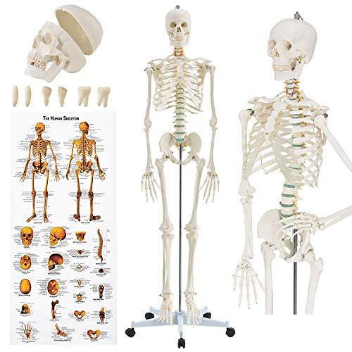 Juskys Anatomie Skelett - Modell inkl. Anatomie-Poster, Stativ mit Rollen & Schutz-Haube - lebensgroß -