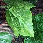 MagiDeal Reptile Vivarium Decoration Aquarium Ornament Artificial Grapes Ivy Vines 51plCiJ1r4L