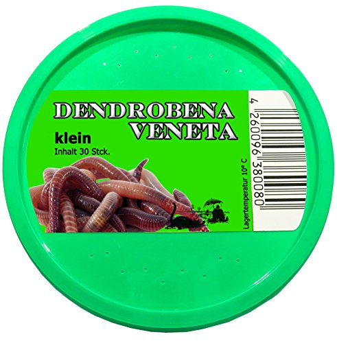 30 Stück kleine Rotwurm Dendrobena Angelköder Kompostwürmer Angelwurm