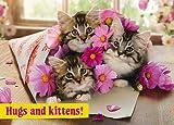 """Geburtstagskarte""""Umarmungen und Kätzchen"""" mit Katzen-in-Blumen-Design"""