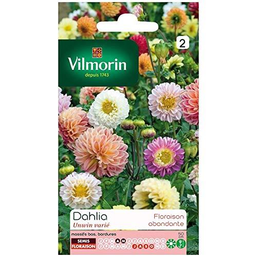 Vilmorin - Sachet graines Dahlia Unwin varié