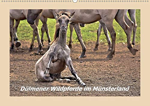 Dülmener Wildpferde im Münsterland (Wandkalender 2020 DIN A2 quer): Lustige und außergewöhnliche Momente mit den Wildpferden im Merfelder Bruch (Monatskalender, 14 Seiten ) (CALVENDO Tiere)