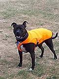 Kühlweste für Hunde, kühlender Hundemantel, Jacke mit Verdunstungskühlung, Weste mit Reflektoren für mehr Sicherheit, für große Hunde, orange, für Spaziergänge, draußen, Jagd, Training, Camping
