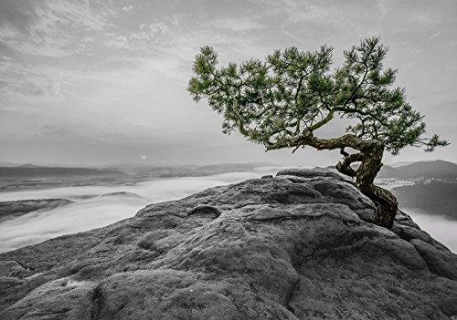Fototapete Vlies Tapete Vliestapete DekoShop Der Baum auf dem Felsen AMD11759VEXXXL VEXXXL (416cm. x 254cm.) Wallpaper Photo Mural | Baum Ausblick Blick Stein Natur Himmel Berg Stein