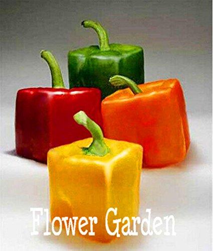 100 PCS / Pack, les plus rares Seeds Place Mixte Orange Vert Rouge Jaune poivrons, légumes Tasty comestibles, # 66VZP0