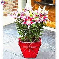 Fash Lady 2 unids Real Lily Bulbs Bonsai Flor de Interior Plantas Que florecen para la Decoraciã³n del Jardãn de su casa Mejor Embalaje 100% de Supervivencia Transmisión al Azar