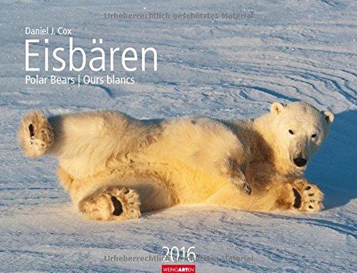 Angeln Kalender Eis (Eisbären 2016)
