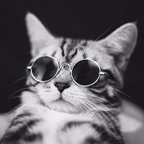 HYGMall 1PC Pet Supplies Nette AC + Metall Haustier Katze Sonnenbrille Super coole Brille Größe Welpen Kätzchen klein für Fotografie Auge Verschleißschutz Weihnachtsgeschenke Sonnenbrille (Schwarz)