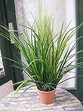 Licht & Grün exclusive Kunstpflanzen Künstliches Gras ca. 70cm im Topf