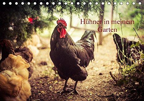 Preisvergleich Produktbild Hühner in meinem Garten (Tischkalender 2017 DIN A5 quer): professionelle Hühnerfotos (Monatskalender, 14 Seiten ) (CALVENDO Tiere)