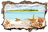 Seestern Muscheln Meer Insel Wandtattoo Wandsticker Wandaufkleber D0458 Größe 60 cm x 90 cm