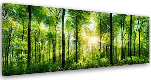 Feeby Frames, Leinwandbild, Bilder, Wand Bild, Wandbilder, Kunstdruck 50x150cm, Wald, BÄUME, Sonne, Natur, GRÜN