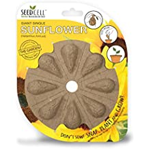 SeedCell SF09 Sunflower Seed - Yellow