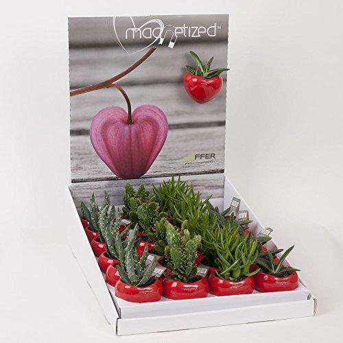 best4garden-macetas-magneticas-con-planta-pequena-varios-colores-a-elegir