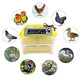 Incubadora de 96 Huevos, Que simula la ecología Original y Natural Caja de incubación automática, 160 w Doble Capa Digital Hatcher