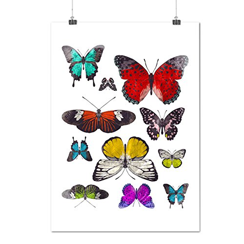 papillon-collection-couleur-aile-matte-glace-affiche-a2-60cm-x-42cm-wellcoda