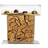 Sand Anthill T with Free Ants (ant farm)