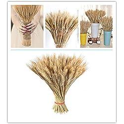 Yiwa 100 getrocknete Blumen, groß, natürliche Primärfarben, echte getrocknete Weizen, Blumenstrauß Dekoration für Zuhause, Party, Hochzeit, Foto-Requisiten