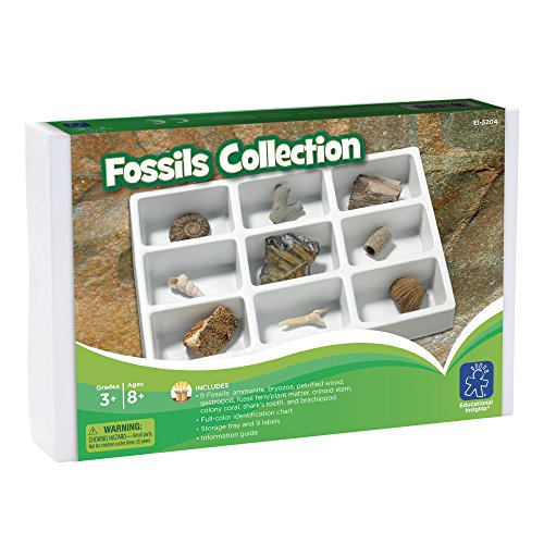 learning-resources-fossil-collection
